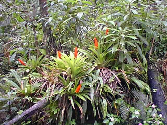 De puerto rico for Bodas en el jardin botanico de rio piedras