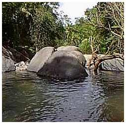 El yunque is divided into 4 forests