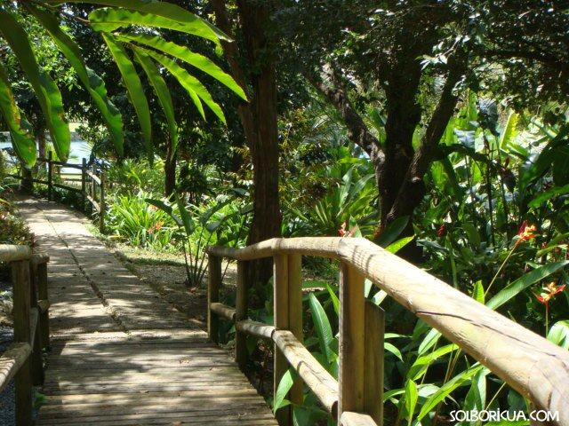 Jardin botanico y cultural de caguas puerto rico for Actividades en el jardin botanico de caguas