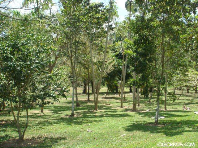 Jardin botanico y cultural de caguas puerto rico for Arboles de jardin fotos